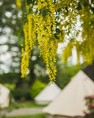 Glamping in the gardens at Ballyvolane